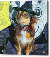 Black And Tan Chihuahua - Such A Good Little Witch Acrylic Print