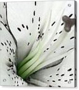 Black And White And A Little Bit Of Green Acrylic Print