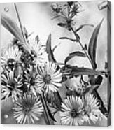 Black And White Asters Acrylic Print