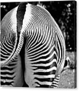 Black And White Acrylic Print by BandC  Photography