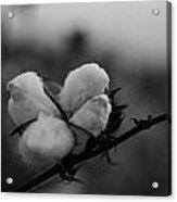 Black And White Boll Acrylic Print