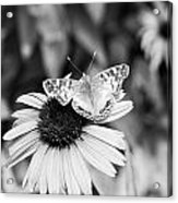 Black And White Butterfly Acrylic Print by Debbie Sikes