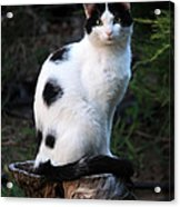 Black And White Cat On Tree Stump Acrylic Print