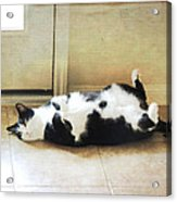 Black And White Cat Reclining Acrylic Print