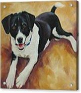 Black And White Dog Acrylic Print