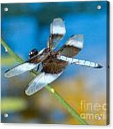 Black And White Dragonfly Acrylic Print