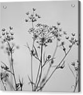 Black And White Floral Silhouettes Acrylic Print