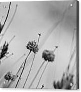 Black And White Flowers Acrylic Print
