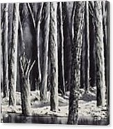 Black And White Forest Acrylic Print