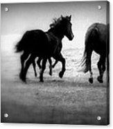 Black And White Horses Acrylic Print
