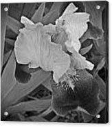 Black And White Iris Acrylic Print