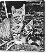 Black And White Kittens Acrylic Print