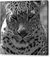 Black And White Leopard Portrait  Acrylic Print