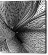Black And White Lily Z Map L Acrylic Print