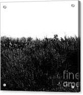 Black And White Magic V2 Acrylic Print