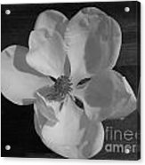 Black And White Magnolia Blossom Acrylic Print