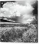 Black And White Meadow Acrylic Print