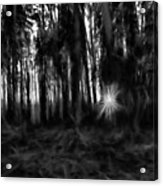 Black And White Monochrome Artistic Painterly Sun Between Trees  Acrylic Print
