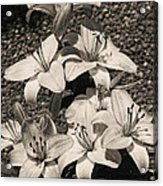 Black And White Orchids Acrylic Print