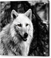 Black And White Painted Wolf Acrylic Print