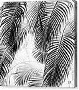 Black And White Palm Fronds Acrylic Print by Karon Melillo DeVega
