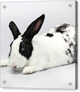 Black And White Pet Rabbi Acrylic Print