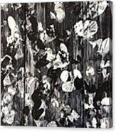 Black And White Acrylic Print