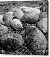Black And White Seashells Acrylic Print