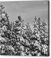 Black And White Snow Covered Trees Acrylic Print