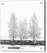 Black And White Square Diptych Tree 12-7693 Set 1 Of 2 Acrylic Print