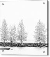 Black And White Tree  Acrylic Print