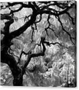 Black And White Tree Art Acrylic Print