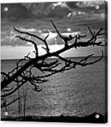 Black And White Tree Acrylic Print