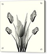 Black And White Tulips Drawing Acrylic Print