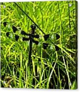 Black And White Winged Dragonfly Acrylic Print