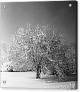 Black And White Winter Acrylic Print by Thomas Fouch