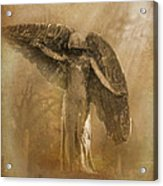Black Angel The Forgotten Series 13 Acrylic Print