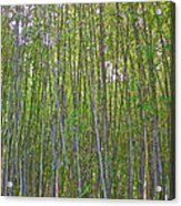Black Bamboo Heights Acrylic Print