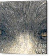 Black Bear Eyes Wildlife Animal Art Acrylic Print