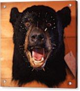 Black Bear Head Acrylic Print