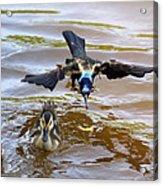 Black Bird On The Water Acrylic Print
