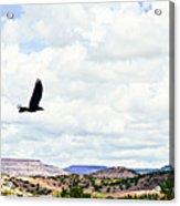 Black Bird In Flight Acrylic Print