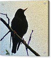 Black Bird Perch Acrylic Print
