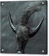 Black Buffalo Acrylic Print