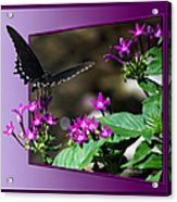 Black Butterfly 07 Acrylic Print