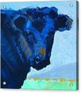 Black Calf Acrylic Print