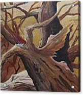 Black Cap Chickadee Acrylic Print