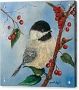 Black Capped Chickadee And Winterberries Acrylic Print