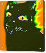Black Cat 3 Acrylic Print