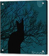 Black Cat In The Moonlight Blue Acrylic Print